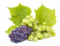 Racimos de la uva azul y blanca con las hojas Imágenes de archivo libres de regalías