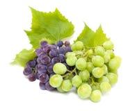 Racimos de la uva azul y blanca con las hojas Fotografía de archivo