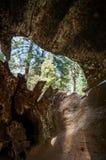 Racine à l'intérieur de séquoia Photographie stock