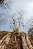 Racine antique d'arbre le long de la clôture, merci temple de Prohm, Angkor Thom, Siem Reap, Cambodge Photos stock