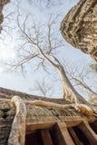 Racine antique d'arbre s'élevant le long du toit du temple de Prohm de ventres, Angkor Thom, Siem Reap, Cambodge Photo libre de droits