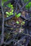 Racine d'arbre Photos stock