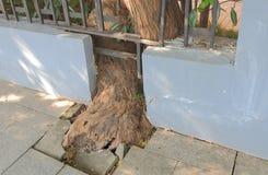 Racine d'arbre de dommage structurel Image libre de droits