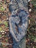 Racine d'arbre de pinus sous forme de coeur en automne Photo libre de droits