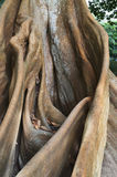 Racine d'un arbre, fond de nature Photographie stock
