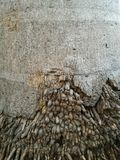 Racine de palmier Image stock