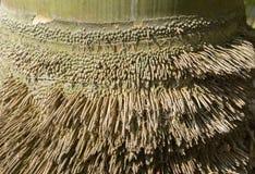 Racine en bambou Images libres de droits