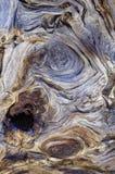 Racine nouée d'arbre le long des traînées de bâti Charleston, Nevada photographie stock libre de droits