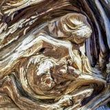 Racine nouée d'arbre le long des traînées de bâti Charleston, Nevada images stock