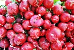 Racine végétale rouge Photos stock