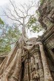 Racine vieille d'un siècle d'arbre, merci temple de Prohm, Angkor Thom, Siem Reap, Cambodge Images libres de droits