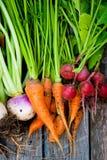 Racines alimentaires de racine Photographie stock