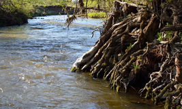 Racines d'arbre dans le courant de l'eau Photographie stock