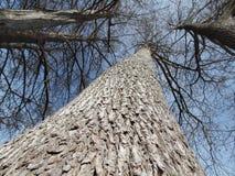 Racines d'arbre s'élevant dans le ciel Images stock