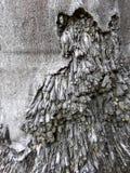 Racines d'arbres de noix de coco Photographie stock