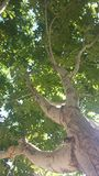 Racines de ciel Photo libre de droits