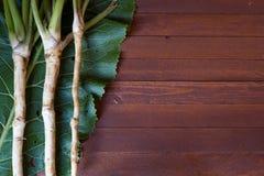 Racines de raifort fraîches Image stock