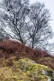 Racines de roche Photo libre de droits