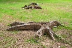 Racines de tronçon, morts d'arbre illustration de vecteur