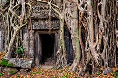Racines en pierre antiques de porte et d'arbre de temple Photo libre de droits