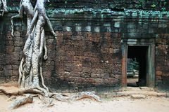 Racines et porte, merci Phrom, Cambodge Photo stock