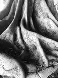 Racines et tronc de ficus images stock