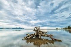 Racines jouant avec le grand lac Images stock