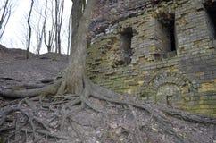Racines nues de sur vieil arbre près d'un mur d'un château ruiné Photos stock