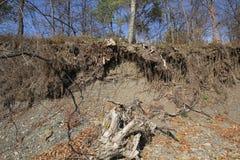 Racines nues des arbres Photographie stock libre de droits