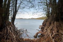 Racines nues des arbres d'aulne sur le rivage de lac, l'eau bleue lisse par exposition de long temps, l'espace de copie photo stock