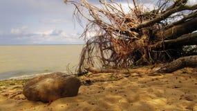 Racines, pierre et mer Photographie stock