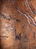 Racines s'élevant de la surface dans une caverne Photo stock