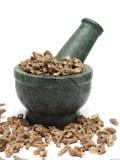 Racines sèches organiques de long poivre et x28 ; Longum& x29 de joueur de pipeau ; sur le pilon de marbre Images stock