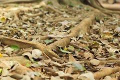 Racines sur la nature au sol Photo stock