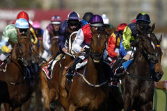 Racing 01. Action of a bunch of race horses during a race head-on Stock Photos