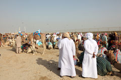 Racing camels market in Qatar Stock Photography