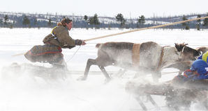 Racing on deer during holiday of the reindeer. Stock Photography