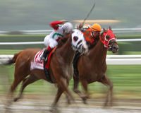 Racing Down the Homestretch Stock Photography