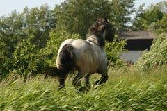 Racing draught horse Stock Photo