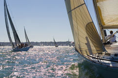 Racing In The Evening Sun. A group of yachts racing in the early evening sun royalty free stock photo