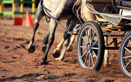 Racing harness. Detail to wheel stock photography