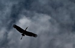 Racing Home. A painted stork in silhouette against a dramatic storm like sky stock photo