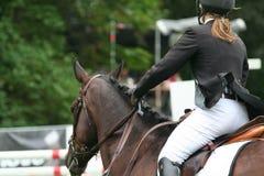 Racing horse Royalty Free Stock Image