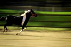 Racing horse Royalty Free Stock Images