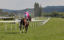 Racing horse coming first to finish line. In summer day, rider on the racing circuit competition Royalty Free Stock Photo
