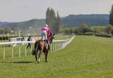 Racing horse coming first to finish line. In summer day, rider on the racing circuit competition Royalty Free Stock Images