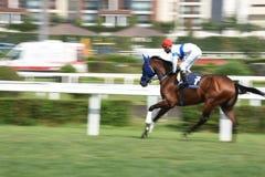 Racing Horse in Competition Motion Pan. Racehorse racing horse racing horse racing race track race track jockey paddock gambling equestrian gamble sport Stock Image
