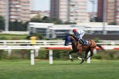 Racing Horse in Competition Motion Pan. Racehorse racing horse racing horse racing race track race track jockey paddock gambling equestrian gamble sport Stock Photo