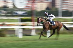 Racing Horse in Competition Motion Pan Stock Image