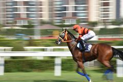 Racing Horse in Competition Motion Pan stock images